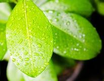 Υγρή επιφάνεια του φύλλου στοκ φωτογραφία