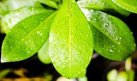 Υγρή επιφάνεια του φύλλου στοκ εικόνα με δικαίωμα ελεύθερης χρήσης