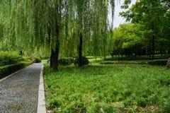 Υγρή κυβόλινθος-στρωμένη πορεία στις εγκαταστάσεις και τα δέντρα του ηλιόλουστου καλοκαιριού μ στοκ φωτογραφία