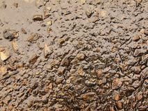 Υγρή μμένη τέφρα της χλόης που σταθεροποιείται από τη βροχή στη σκοτεινή λάσπη Κρεμασμένη νερό τέφρα στην κάλυψη Στοκ Εικόνες
