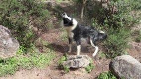 Υγρή ξήρανση σκυλιών υπαίθρια φιλμ μικρού μήκους
