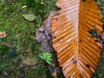 Υγρή ξηρά άδεια φθινοπώρου στο βρύο στοκ εικόνα