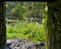 Υγρή πετρώδης σήραγγα με το στάζοντας ρεύμα του νερού - δάσος και gree Στοκ Φωτογραφίες