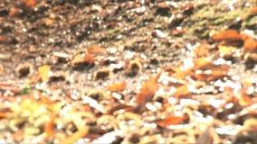 Υγρασία στο δάσος απόθεμα βίντεο