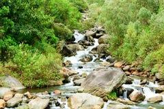 Υγρός δασικός ποταμός Στοκ εικόνες με δικαίωμα ελεύθερης χρήσης