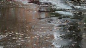 Υγρός δρόμος ασφάλτου στην πόλη στη βροχή φθινοπώρου απόθεμα βίντεο