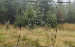 Υγρός ιστός αράχνης πρωινού στα βουνά Slavkovsky Les Στοκ φωτογραφία με δικαίωμα ελεύθερης χρήσης