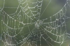 Υγρός ιστός αράχνης πρωινού στα βουνά Slavkovsky Les Στοκ εικόνες με δικαίωμα ελεύθερης χρήσης