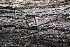 Υγρός φλοιός δέντρων Στοκ Φωτογραφίες