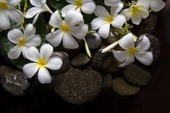 Υγρότοποι Plumeria στο ξύλο και την πέτρα Στοκ εικόνες με δικαίωμα ελεύθερης χρήσης