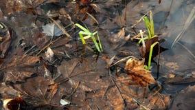 Υγρότοπος επιφύλαξης φύσης στη λίμνη Traunsee σε Gmunden Άνω Αυστρία φιλμ μικρού μήκους