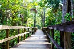Υγρότοπος της Φλώριδας, ξύλινο ίχνος πορειών στο εθνικό πάρκο Everglades στις ΗΠΑ στοκ εικόνες