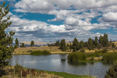 Υγρότοπος Cuzco Περού Huayllarqocha Στοκ εικόνα με δικαίωμα ελεύθερης χρήσης