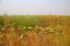 Υγρότοπος Lingbao στοκ εικόνα με δικαίωμα ελεύθερης χρήσης