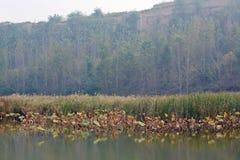 Υγρότοπος Lingbao στοκ φωτογραφίες
