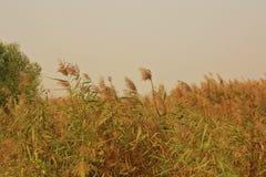 Υγρότοπος Lingbao στοκ φωτογραφίες με δικαίωμα ελεύθερης χρήσης