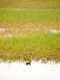 Υγρό έδαφος του Χογκ Κογκ Στοκ φωτογραφία με δικαίωμα ελεύθερης χρήσης