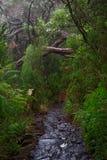 Υγρό ίχνος πεζοπορίας σε ένα τροπικό δάσος στοκ φωτογραφίες με δικαίωμα ελεύθερης χρήσης