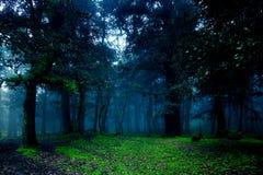 Υγρό δάσος του Ιμαλαίαυ κατά τη διάρκεια της βροχερής ημέρας στοκ φωτογραφία με δικαίωμα ελεύθερης χρήσης