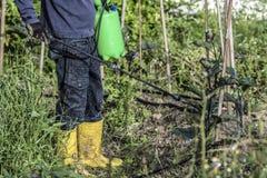 Υγρό θειικό άλας χαλκού Sapraying Στοκ εικόνες με δικαίωμα ελεύθερης χρήσης