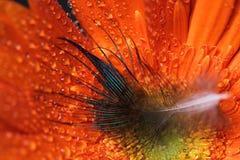 Υγρό μαργαριτάρι λουλουδιών Στοκ εικόνες με δικαίωμα ελεύθερης χρήσης