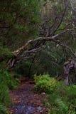 Υγρό μονοπάτι σε ένα τροπικό δάσος στοκ εικόνα