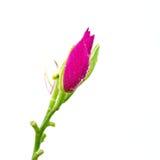 Υγρό λουλούδι Στοκ φωτογραφία με δικαίωμα ελεύθερης χρήσης