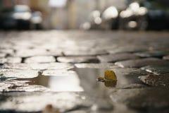 Υγρό παλαιό πεζοδρόμιο με τα φύλλα λακκούβας και φθινοπώρου Στοκ φωτογραφία με δικαίωμα ελεύθερης χρήσης