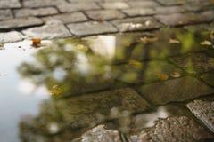 Υγρό παλαιό πεζοδρόμιο με τα φύλλα λακκούβας και φθινοπώρου Στοκ Εικόνες