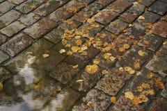 Υγρό παλαιό πεζοδρόμιο με τα φύλλα λακκούβας και φθινοπώρου Στοκ φωτογραφίες με δικαίωμα ελεύθερης χρήσης