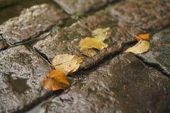 Υγρό παλαιό πεζοδρόμιο με τα φύλλα φθινοπώρου Στοκ Εικόνα
