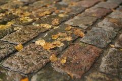 Υγρό παλαιό πεζοδρόμιο με τα φύλλα φθινοπώρου Στοκ Εικόνες