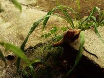 Υγρό σαλιγκάρι Part3 Στοκ Φωτογραφίες