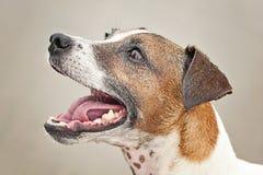 Υγρό σκυλί στην παραλία έτοιμη να χαράξει τη σφαίρα του Στοκ φωτογραφίες με δικαίωμα ελεύθερης χρήσης
