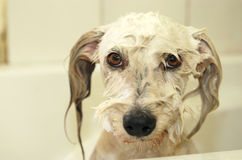 Υγρό σκυλί στοκ φωτογραφίες με δικαίωμα ελεύθερης χρήσης