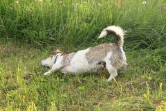Υγρό σκυλί Στοκ φωτογραφία με δικαίωμα ελεύθερης χρήσης