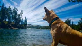 Υγρό σκυλί Στοκ εικόνες με δικαίωμα ελεύθερης χρήσης