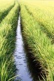 Υγρό σύστημα άρδευσης πεδίων ορυζώνα Στοκ Εικόνες