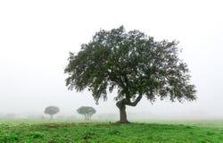 Στοκ εικόνες: βροχή τοπίων ομίχλης