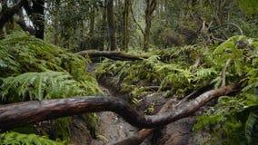Υγρό τροπικό relict δάσος φιλμ μικρού μήκους