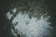 Υγρό τσιμεντένιο πάτωμα Στοκ Εικόνες