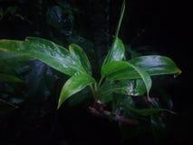 Υγρό φύλλο μετά από τη βροχή στοκ εικόνες