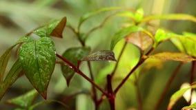 Υγρό φύλλωμα εγκαταστάσεων στο περιβάλλον φύσης βροχής φιλμ μικρού μήκους