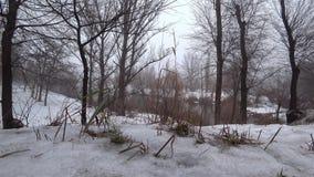 Υδρονέφωση πέρα από τον τρέχοντα ποταμό σε ένα πάρκο, χιόνι, thaw, άνοιξη απόθεμα βίντεο