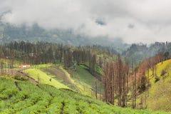 Υδρονέφωση που ρέει πέρα από το χωριό Cemoro Lawang το πρωί που βρίσκεται βόρειο-ανατολικά της ΑΜ Bromo, Ινδονησία στοκ φωτογραφίες με δικαίωμα ελεύθερης χρήσης