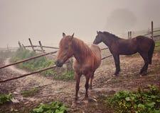 Υδρονέφωση πρωινού με τα άλογα στοκ εικόνες με δικαίωμα ελεύθερης χρήσης