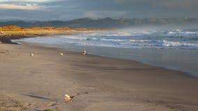 Υδρονέφωση πρωινού στην παραλία Waihi απόθεμα βίντεο