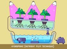 Υδροπονική θρεπτική τεχνική ταινιών διανυσματική απεικόνιση