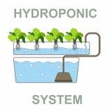 Υδροπονικό σύστημα - Chlorophytum στοκ εικόνες