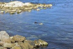Υδροχόος κολυμπά στην ακτή παλαιού Nessebar Στοκ Φωτογραφίες